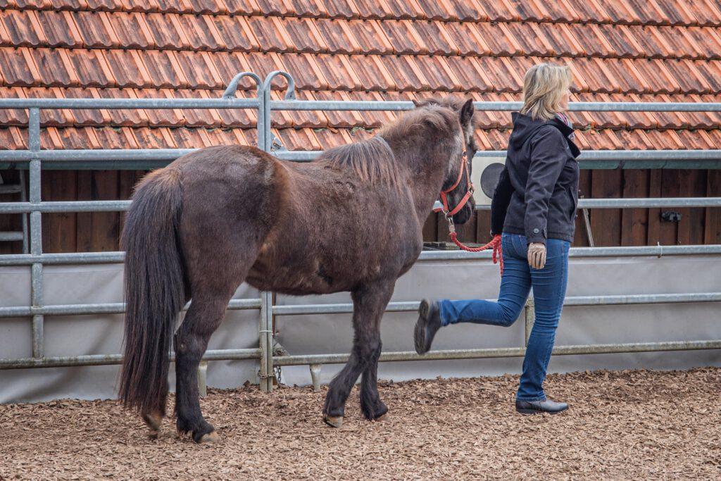 Mensch-Pferd-Arbeit