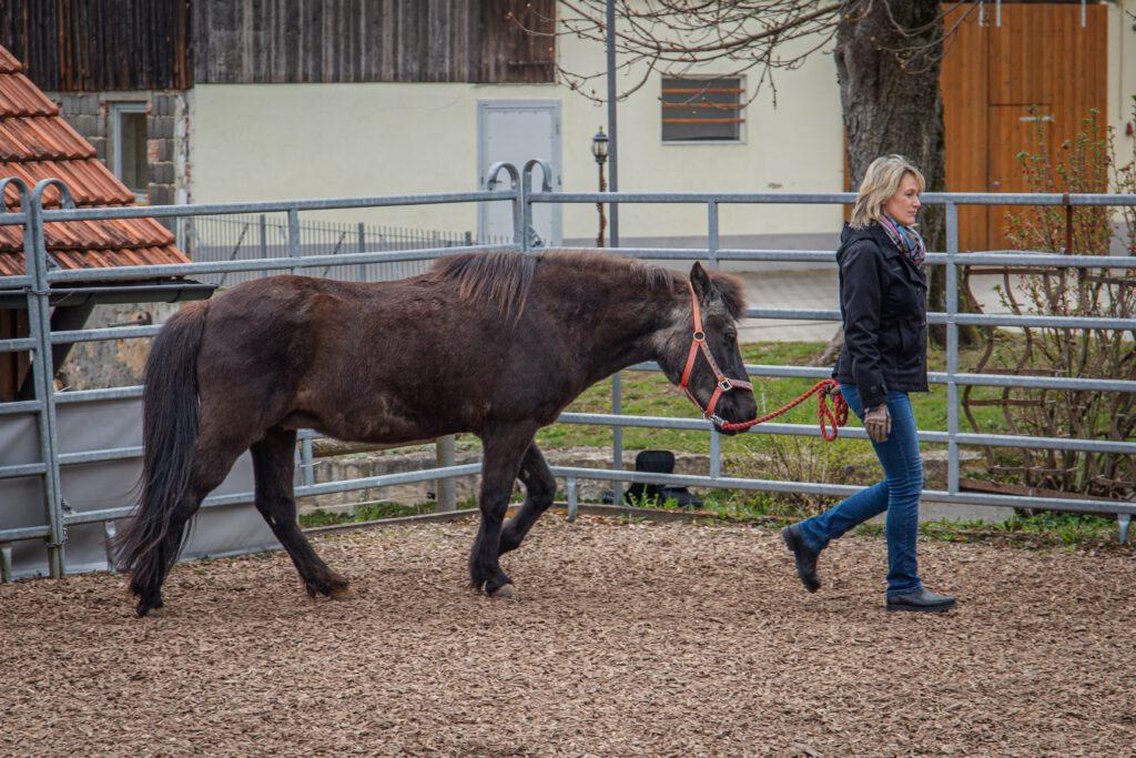Mensch-Pferd-Arbeit-Islandpferde