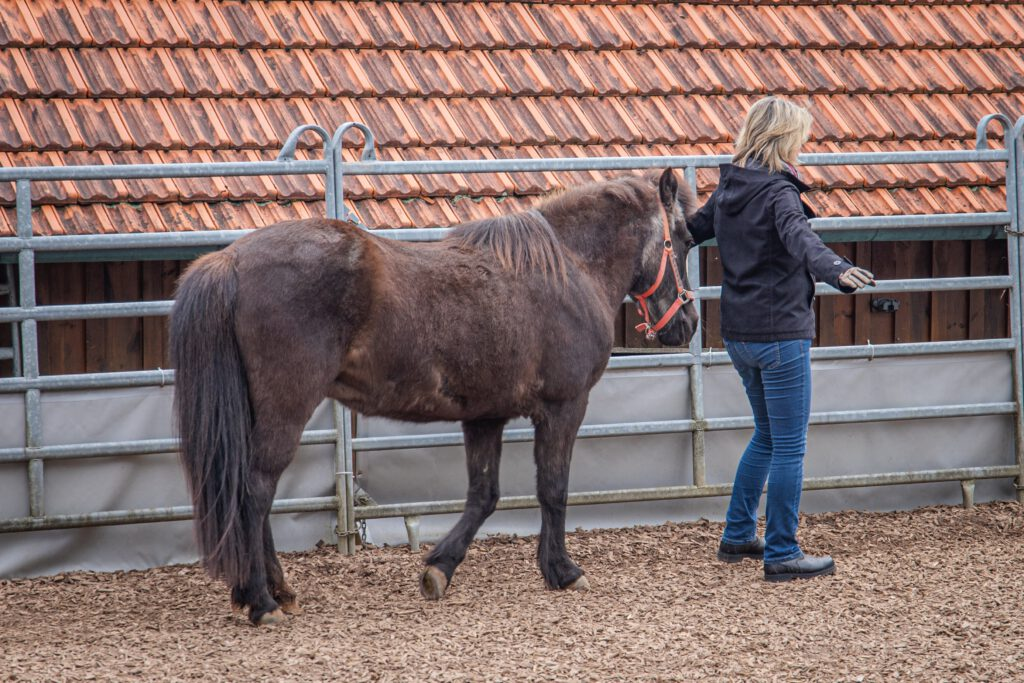 Mensch-Pferd-Arbeit-Psychotherapie